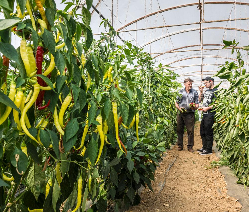Erntefrisches Gemüse aus der Umgebung