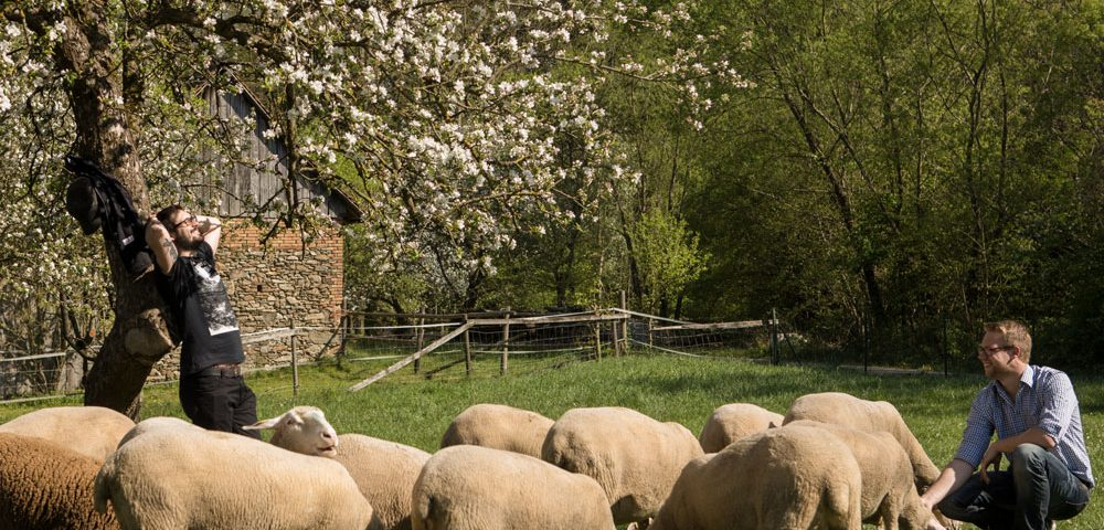 Zur Osterzeit: Lamm und Bärlauch